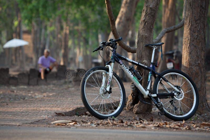 Ciclista superior que senta-se por uma árvore em um parque com sua bicicleta imagens de stock