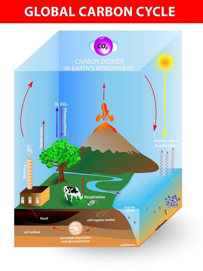 Ciclo de carbono. Diagrama do vetor ilustração royalty free