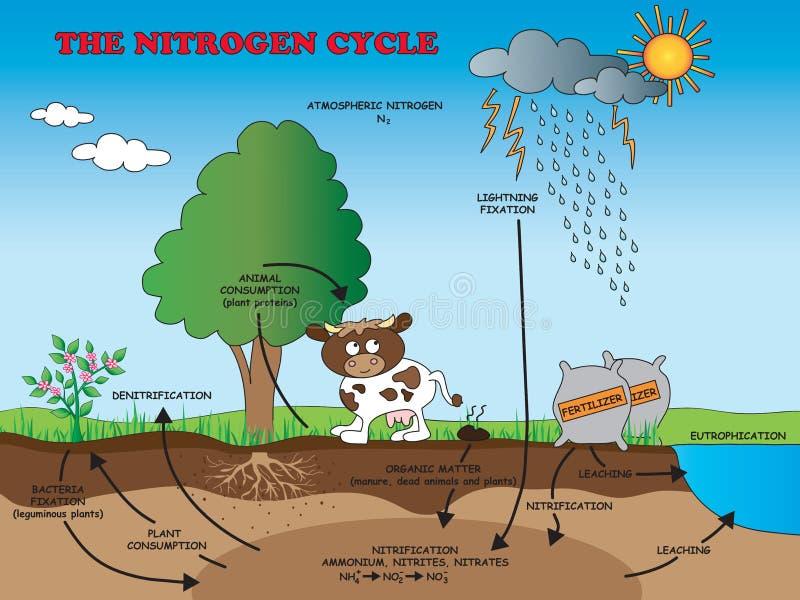 Ciclo de nitrogênio para a escola ilustração do vetor