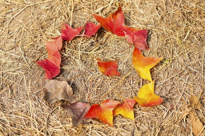 Ciclo de vida caido de las hojas de otoño imagen de archivo