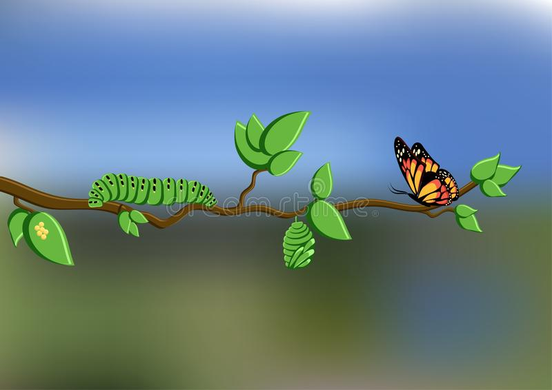 Ciclo de vida da borboleta com ovos, lagarta, crisálidas, borboleta no ramo de árvore no fundo natural ilustração do vetor