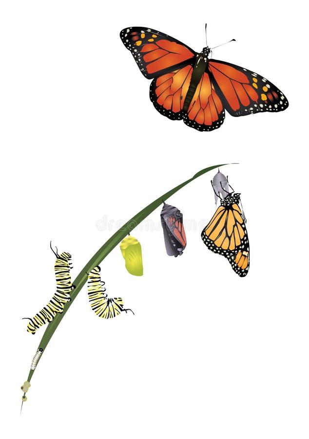 Ciclo de vida da borboleta de monarca ilustração do vetor