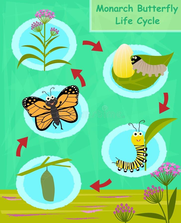 Ciclo de vida da borboleta de monarca ilustração royalty free