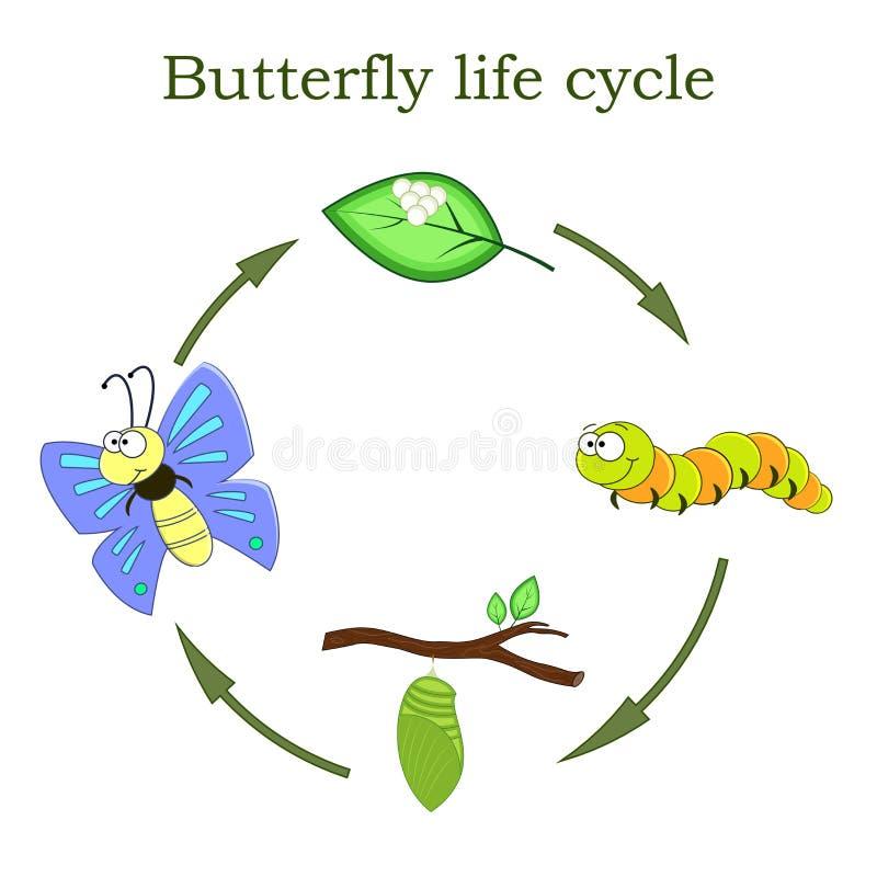 Ciclo de vida da borboleta em um estilo dos desenhos animados Ilustração do vetor ilustração do vetor
