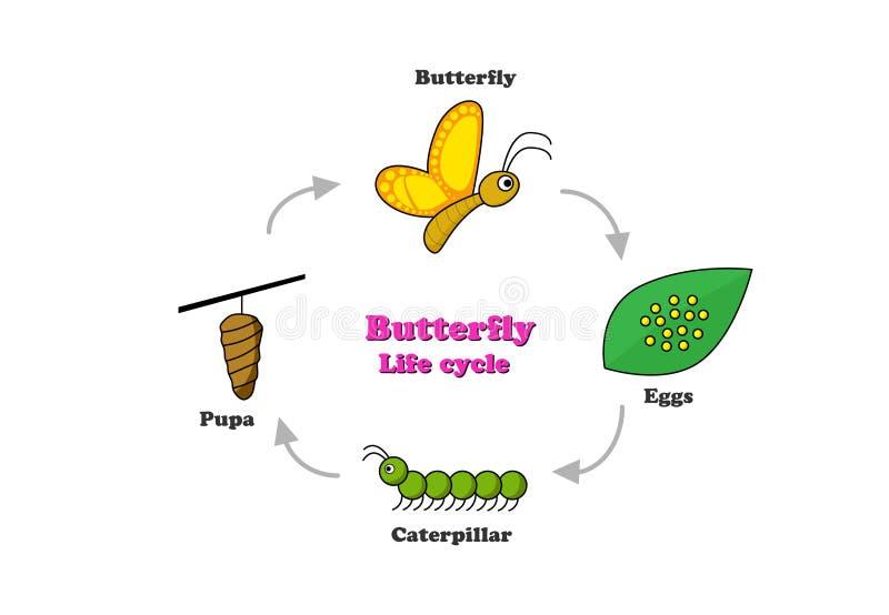 Ciclo de vida da borboleta no estilo colorido, vetor ilustração do vetor