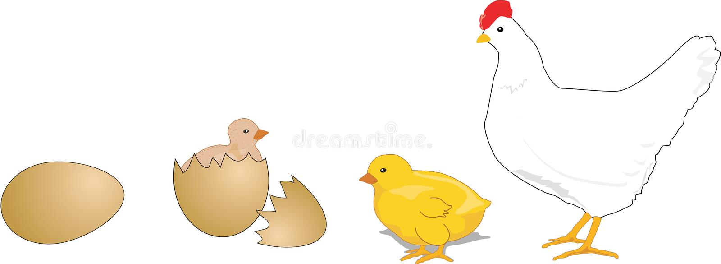 Ciclo de vida da galinha ilustração royalty free