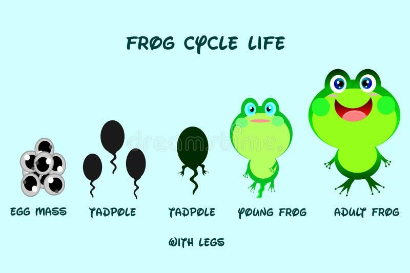 Ciclo de vida de la rana, estilo de la historieta, vector de la vida de animales stock de ilustración