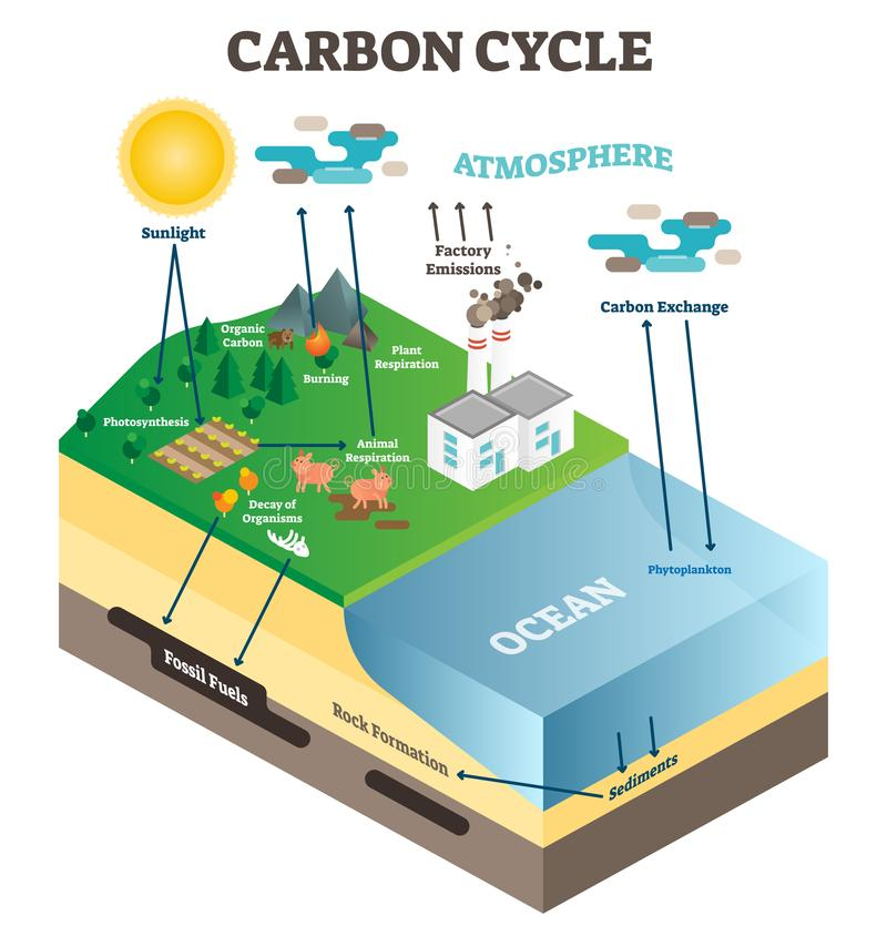 Ciclo del intercambio del carbono de la atmósfera en la naturaleza, escena del diagrama del ejemplo del vector de la ciencia de l ilustración del vector