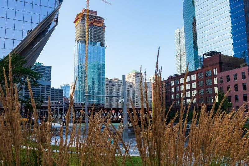 Ciclo di Chicago visto dietro le onde ambrate alte di erba con Chicago River, il treno di EL ed i grattacieli immagini stock libere da diritti