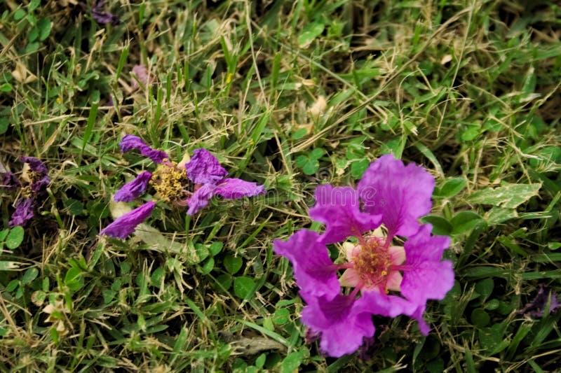Ciclo di vita dei fiori fotografia stock