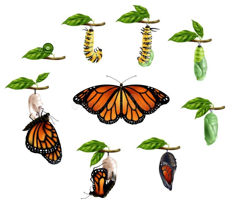 Ciclo di vita dell'insieme realistico della farfalla illustrazione di stock
