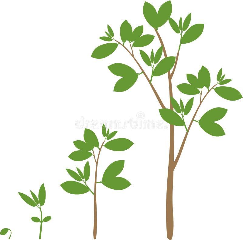 Ciclo di vita di un albero illustrazione di stock