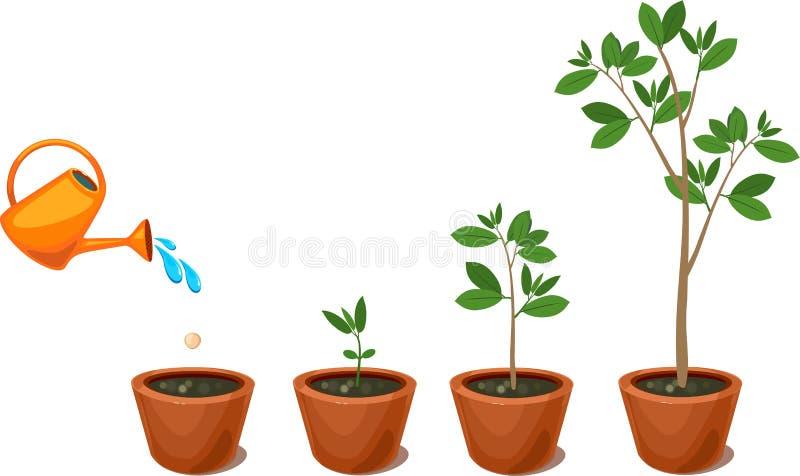 Ciclo di vita di un albero: dal seme al grande albero illustrazione vettoriale
