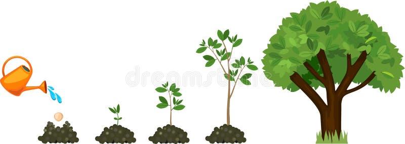Ciclo di vita di un albero: dal seme al grande albero illustrazione di stock