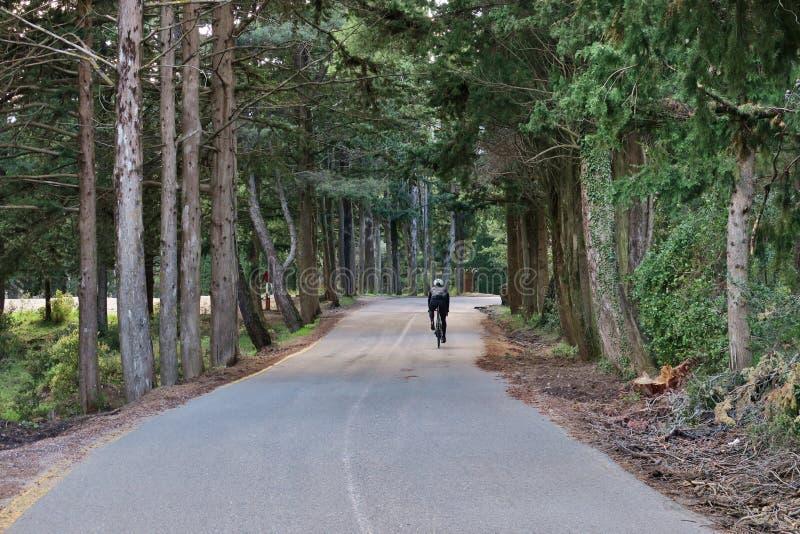 Ciclo a lo largo de un camino forestal en un día soleado imágenes de archivo libres de regalías