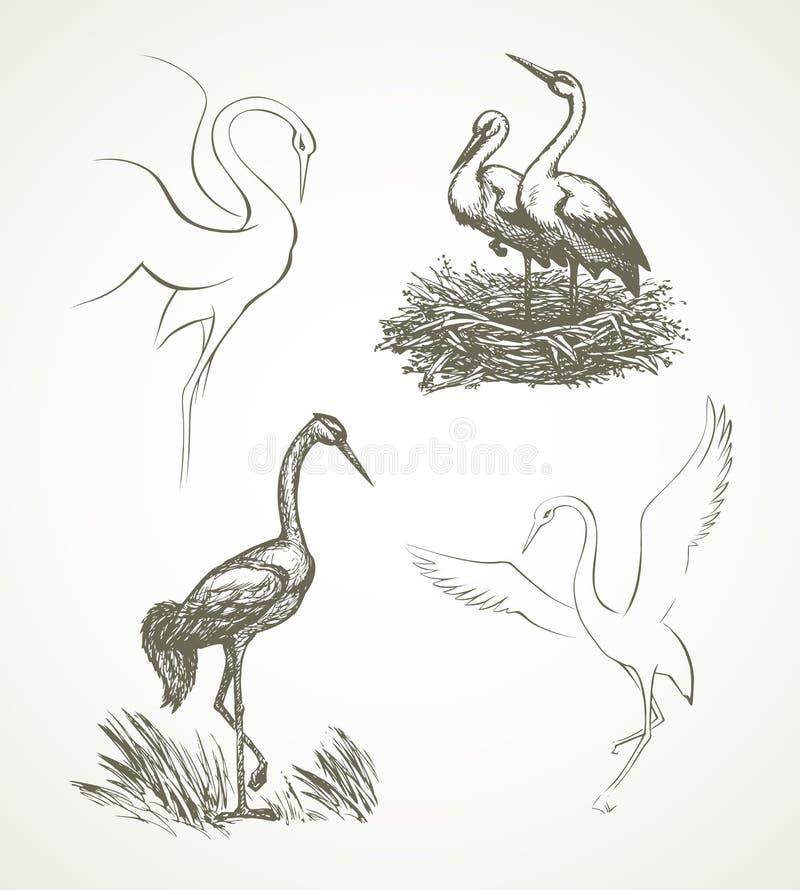 cicogna Illustrazione di vettore illustrazione vettoriale