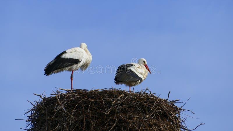 Cicogna nel nido, alto sopra i tetti della città fotografia stock libera da diritti