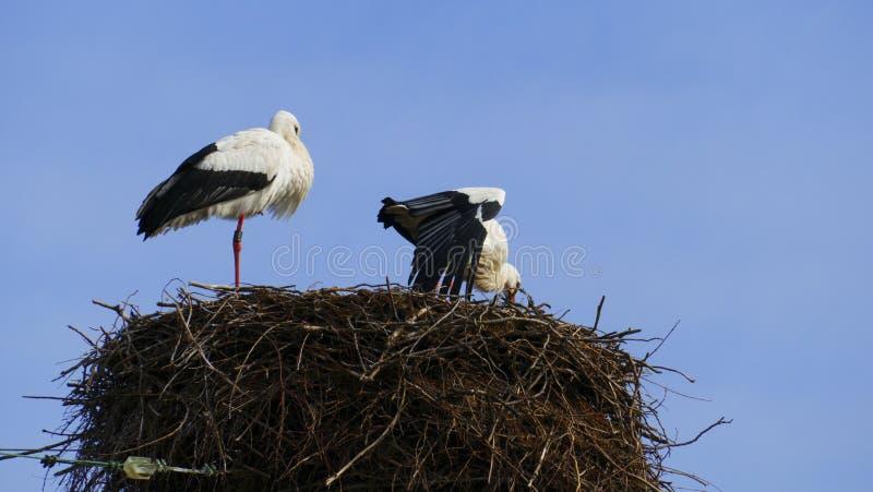 Cicogna nel nido, alto sopra i tetti della città immagine stock