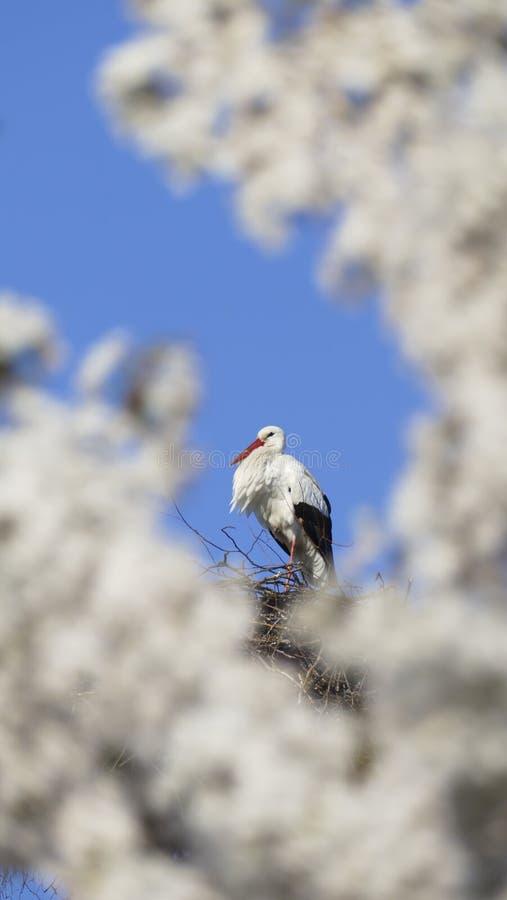 Cicogna nel nido, alto sopra i tetti della città immagini stock libere da diritti