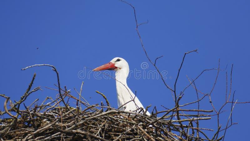 Cicogna nel nido, alto sopra i tetti della città fotografia stock