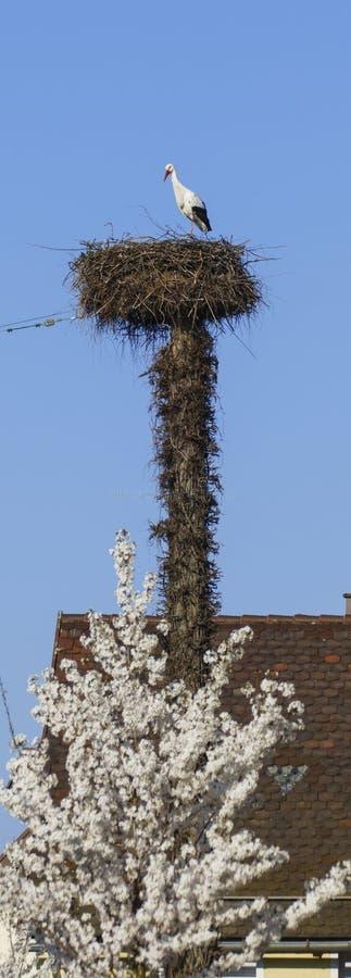 Cicogna nel nido, alto sopra i tetti della città fotografie stock libere da diritti