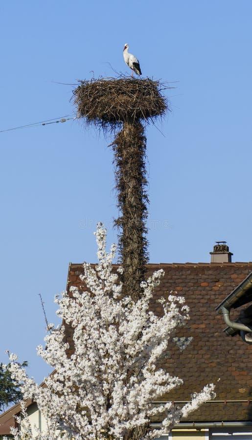 Cicogna nel nido, alto sopra i tetti della città immagine stock libera da diritti