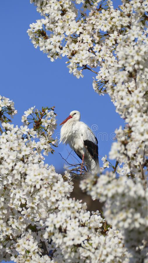 Cicogna nel nido, alto sopra i tetti della città fotografie stock