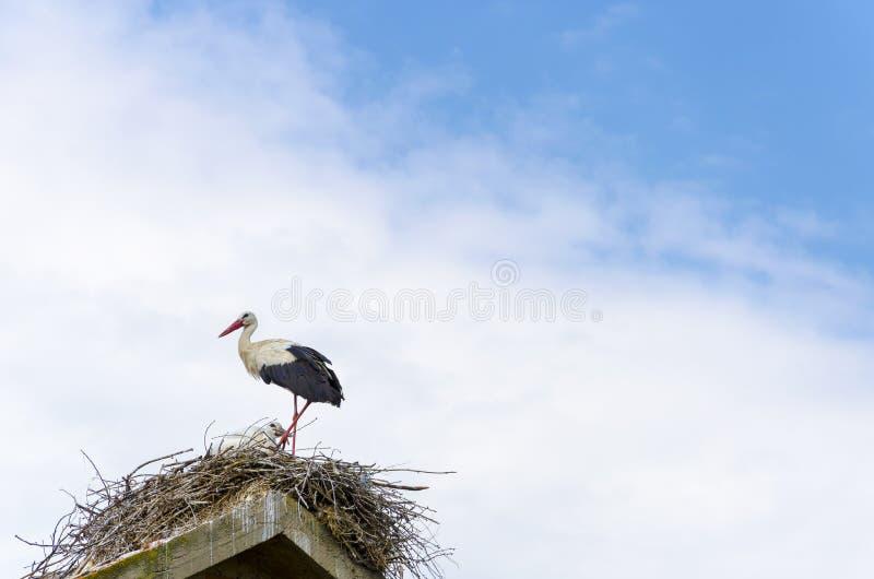 Cicogna nel suo nido immagini stock