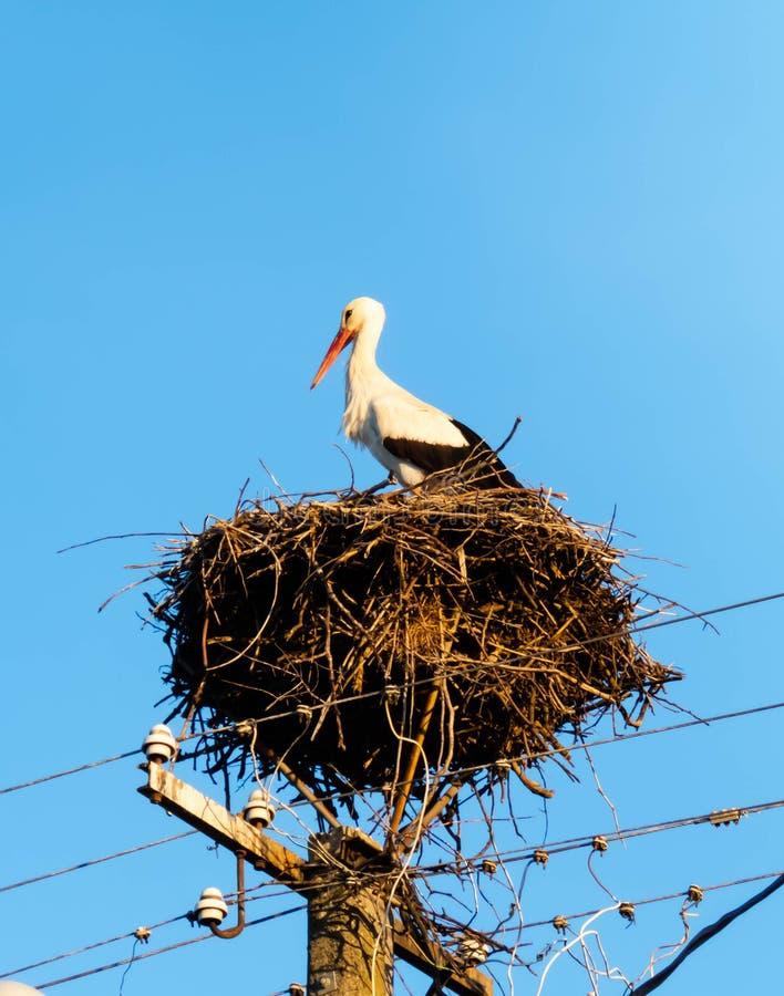 Cicogna nel suo nido su un palo elettrico immagini stock libere da diritti