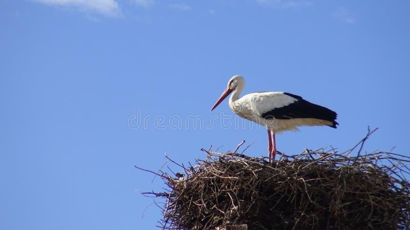 Cicogna sul nido sopra una colonna con cielo blu alla città della Spagna fotografia stock libera da diritti