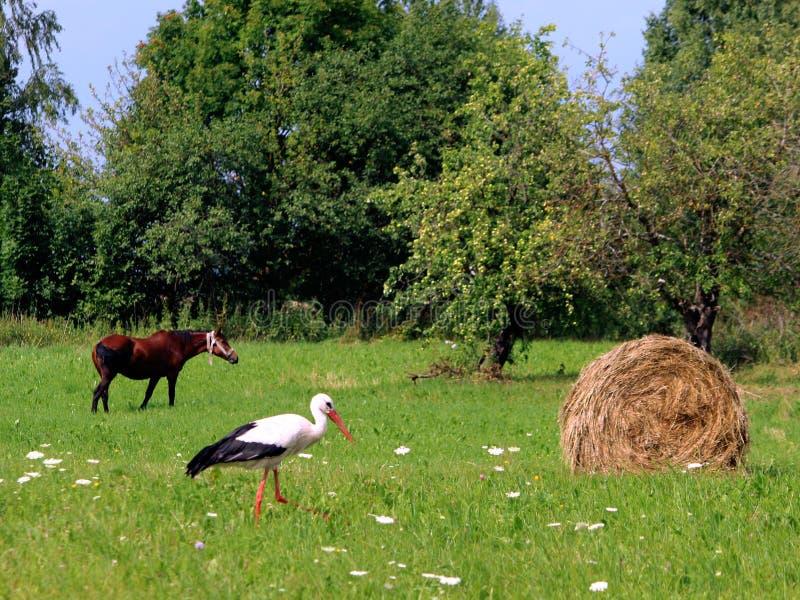 Cicogne e un mucchio di fieno villaggio Luce del giorno Fotografia di estate fotografia stock