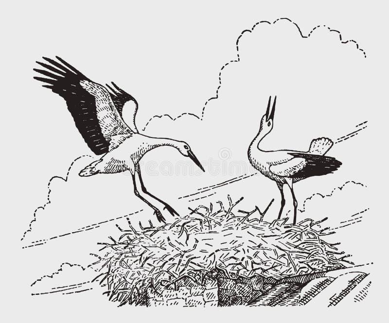 Ciconia del ciconia de dos cigüeñas blancas que se sienta en una jerarquía en un top de chimenea libre illustration