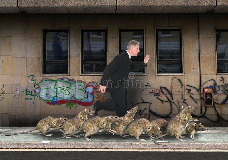 Cidade aglomerada, competição desenfreada, ratos fotos de stock