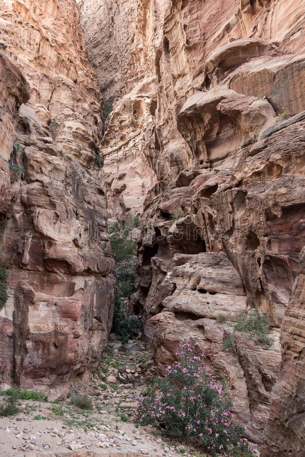 Cidade antiga de PETRA, Jordânia imagem de stock royalty free