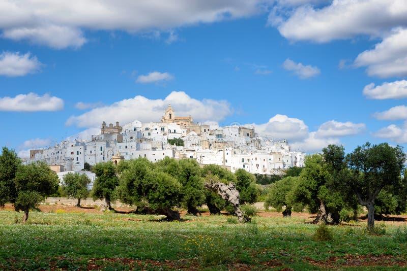 Cidade branca Ostuni de Puglia com oliveiras imagem de stock royalty free