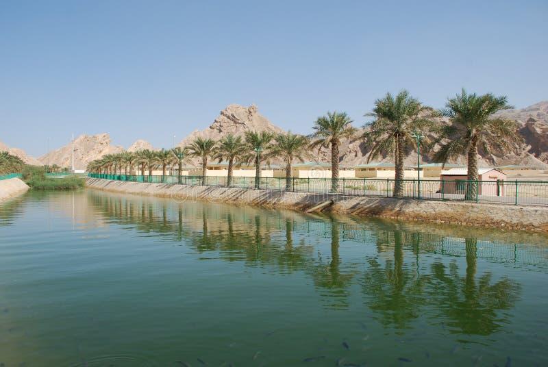 Cidade de Al Ain fotos de stock royalty free