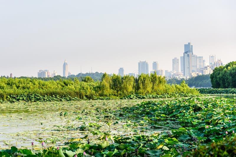 Cidade de Lotus e de Nanjin imagens de stock royalty free