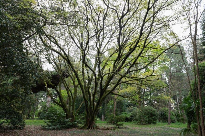Cidade do Parque Cultural Sul de Sotchi imagens de stock royalty free