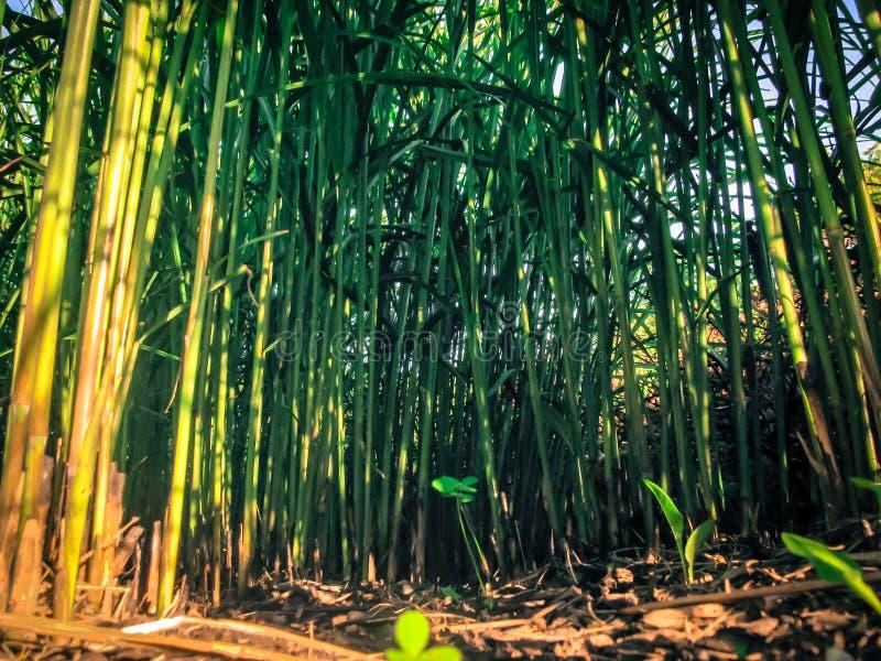 Cidade verde jungle7, grama do efeito imagem de stock