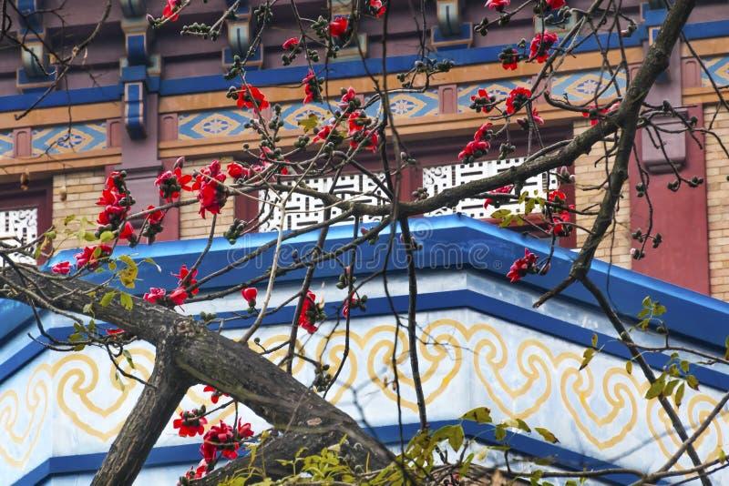 Cidade vermelha China de Guangzhou da flor do algodão imagem de stock royalty free