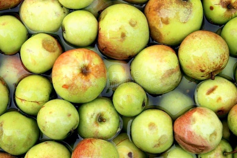 Download Cider Apples stock photo. Image of cider, press, production - 26599094