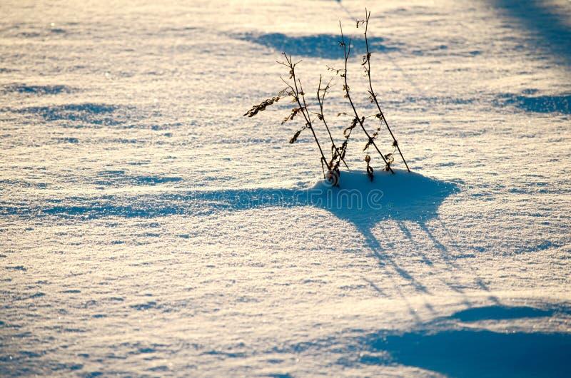 Cień śnieg - tło wizerunek zdjęcia royalty free