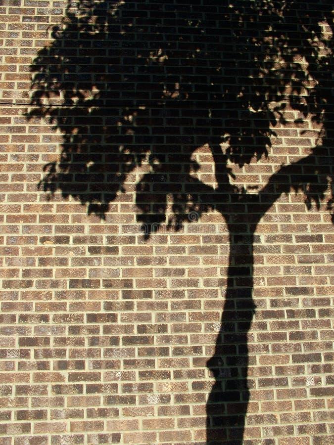 cień drzewa zdjęcia stock