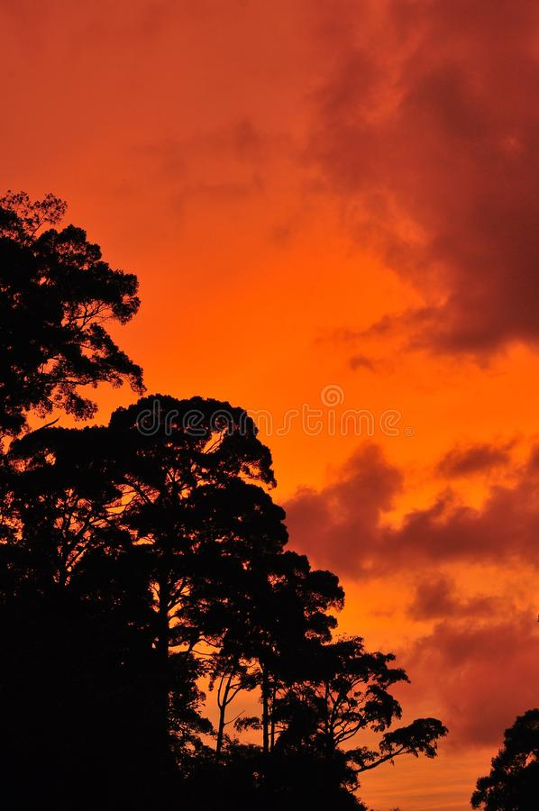Cień drzewo na pomarańczowym tle zdjęcie stock