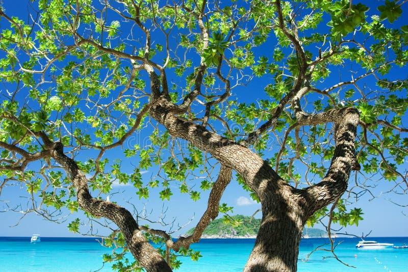 Cień drzewo z pięknym niebem zdjęcia royalty free