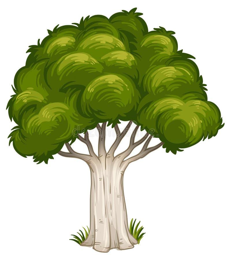 Cień duży drzewo ilustracji