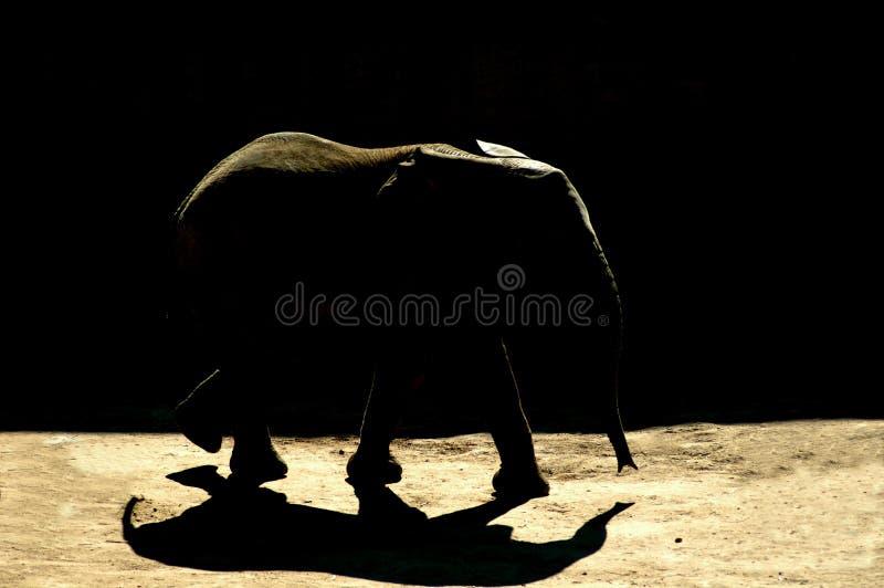 cień słonia fotografia stock