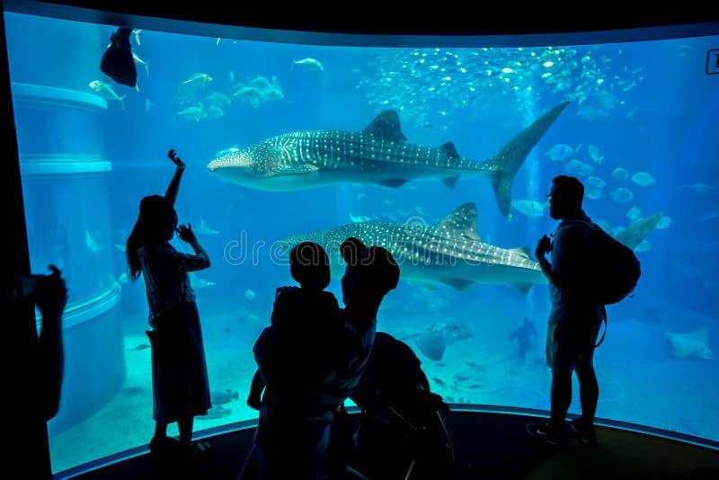 Cień turyści bierze obrazki i cieszy się denne istoty przy Osaka akwarium Kaiyukan w Osaka, Japonia obraz royalty free