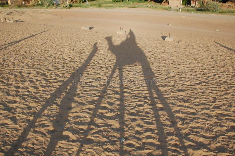 Cień wielbłąd zdjęcie royalty free