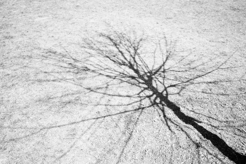 Download Cień. obraz stock. Obraz złożonej z drzewo, nagi, zima - 132999